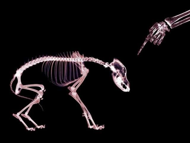 X-Ray xr31.jpg